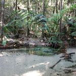 Stiller Bach im Regenwald