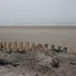 Ein Grindelwalskelett am Strand