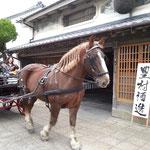 映画祭盛り上がる中、津屋崎名物「観光馬車」が通過します。