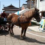 豊村酒造の目の前は馬車の発着所。馬かっこいい!