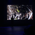 2014 Brisbane Experimental Art Festival: 'The Fen'