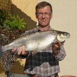 Eine traumhafte Balche von Hans Stöckli! Bei 59cm bringt der Fisch 2,2 Kg auf die Waage.