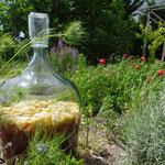 Pétillant de fleurs de sureau
