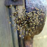 Nid d'araignées