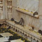 Ein Boxkampf unter den Ratten