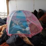 """Theos Mittagsschlaf unter der """"Kuchenhaube"""". Schutz vor nervigen Fliegen!"""