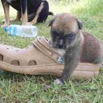 ...liebt Schuhe
