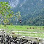 Ein Eisvogel - im englischen Kingfisher genannt, nach dem indischen Bier
