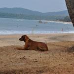 Safi - der Hund aus Slowenien