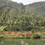 Traumhafte Landschaft auf dem Weg nach Goa