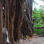 Opfergaben am Holy Tree