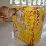 Das Paket aus Deutschland trifft ein! Einer der Maggie-Tomatensoßen-Würfel ist explodiert. Ford schmeckts!