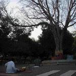 Warten auf die Andacht vor Gandhis Baum