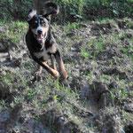 Ole freut sich, endlich wieder durch die Natur rennen zu können!