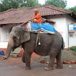 Wir sehen unseren ersten Elefant!