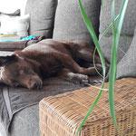 Emma, eine liebe Hundedame