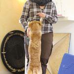 kleiner Hund ganz groß