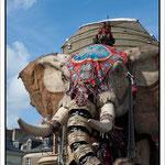 L'élèphant. Par David Lair Photographe à Ancenis.