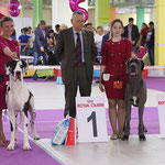 The first Special Dog Show in our career!Fanches Del Toro  CW, J. Club Winner (in 3 entries), BOB J., BISS !!!