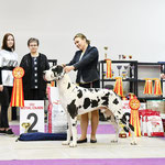 2NDS 15.03.2020 Fanches Del Toro (imp. Germany) 2x САС, 2X BOB, 2хBIG. r. BEST IN SHOW