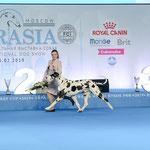 IDS Eurasia 2019 CACIB, BOB, CH. RKF, CH. EURASIAN!!