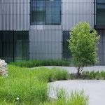 Pflanzinsel mit Magnolia kobus und Gräserumpflanzung