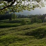 Weidefläche mit freigestellten Solitärgehölzen und Heckensäumen