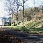 Alte Allee am Pfefferberg