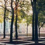 Baumraster auf dem östlichen Parkbereich mit großformatigen Platten