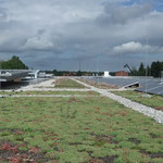 Dachbegrünung extensiv mit Photovoltaikanlage