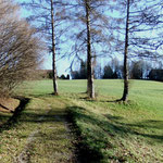 Weg zum Pfefferberg mit freigestellter Lärchengruppe