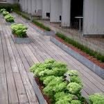 Pflanzstreifen auf der großen Terrasse