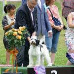BIS Welpen 2 Platz - Karamyst Nash Starlight