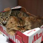 Kartons sind sehr beliebt.