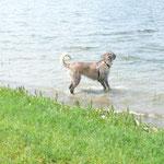 Gina im Wasser, es gibt kein halten mehr