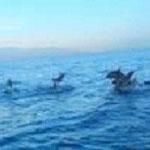 イルカウォッチングimage