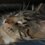 Und auch ich kann endlich wieder sorglos schlafen!! ;.-) ;-) Unter dem Sofa bin ich in Sicherheit!!