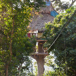 Tree House in Bokeo