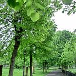 雨あがり。緑が鮮やかでした