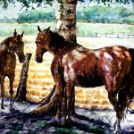 Pferdekoppel Aquarell 61x86 1996