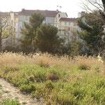 Vue de la cité Burel, depuis le parc