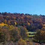31-10-15 Forêt aux couleurs automnales (Ain)