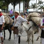 """""""Arrobas"""" de café transportées sur des mules lors d'une fête traditionnelle à Salento (Quindio)"""