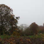 01-11-15 Traversée de l'Ain, dans le brouillard !