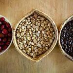 Chaque pulpe (rouge) renferme un grain de café (jaune) qui sera torréfié (noir).