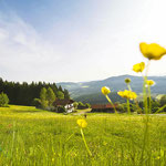 Natur erleben im Bayerischer Wald