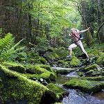 Walderlebnis Bayerischer Wald