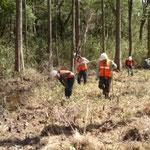 湿地のササ刈り
