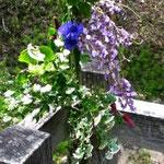 竹の花入れに飾った花