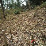 カタクリの森で残っていた部分笹狩り(作業後)